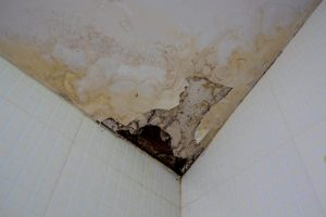 Can mold in your home make you sick