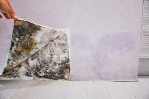 Do water stains mean mold