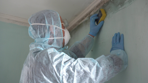 How do you know if mold is making you sick