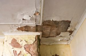 Is mold from water damage dangerous