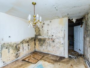 Looking for the best San Diego water damage repair experts