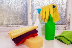 What are the different types of mold in homes