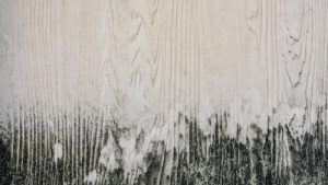 What causes mildew on wood