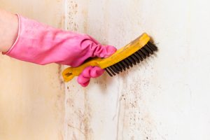 do i really need mold remediation